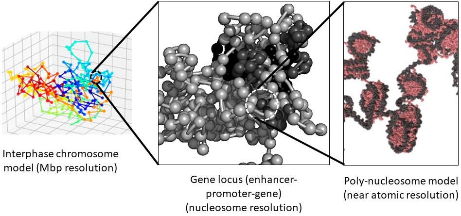 A01-1 ゲノムモダリティのマルチスケール理論